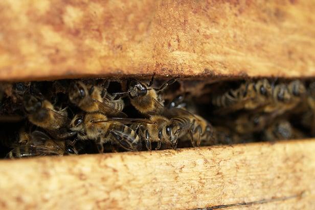colmenas-de-poliuretano-para-aumentar-la-produccion-de-miel-02