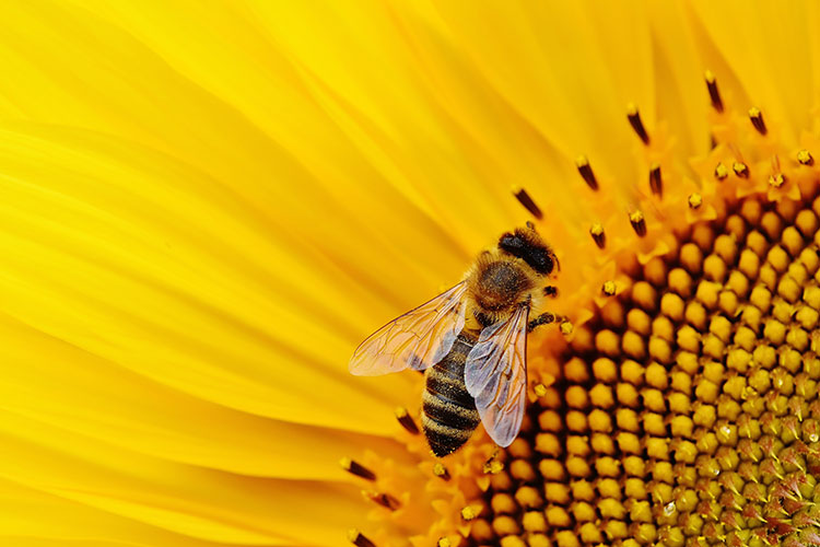 Polyurethane hives to increase honey production